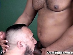 Bareback loving bear assfucks after blowjob